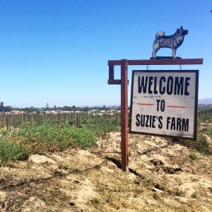 Suzie's Farm sign